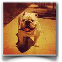 """Juanito """"Da Bulldog"""""""